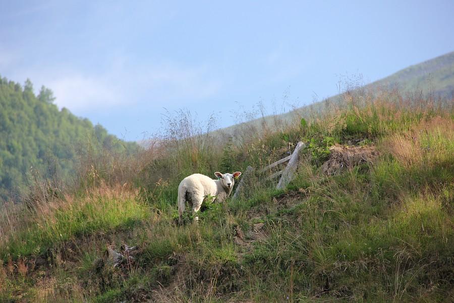 Норвегия, фотографии, природа, Аксанов Нияз, Kukmor, жж, of IMG_8026