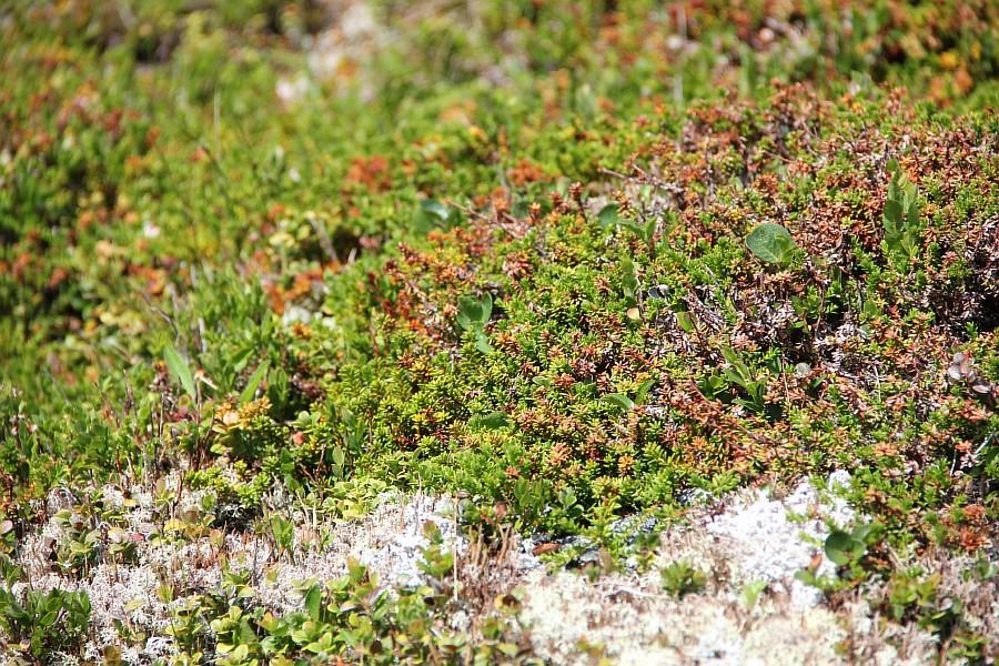 Норвегия, природа, путешествия, фотография, Аксанов Нияз, kukmor, жж, of IMG_8360