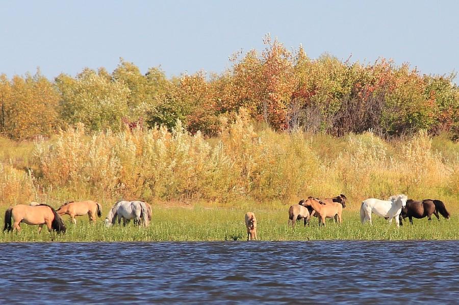 Resize of Якутские лошади