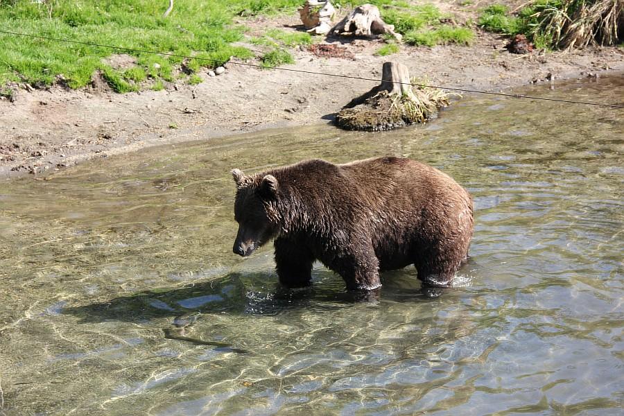 Камчатка, медведи, рыбалка, Кроноцкий заповедник, Аксанов Нияз, фотографии, kukmor, природа, путешествия, Россия, of IMG_5997