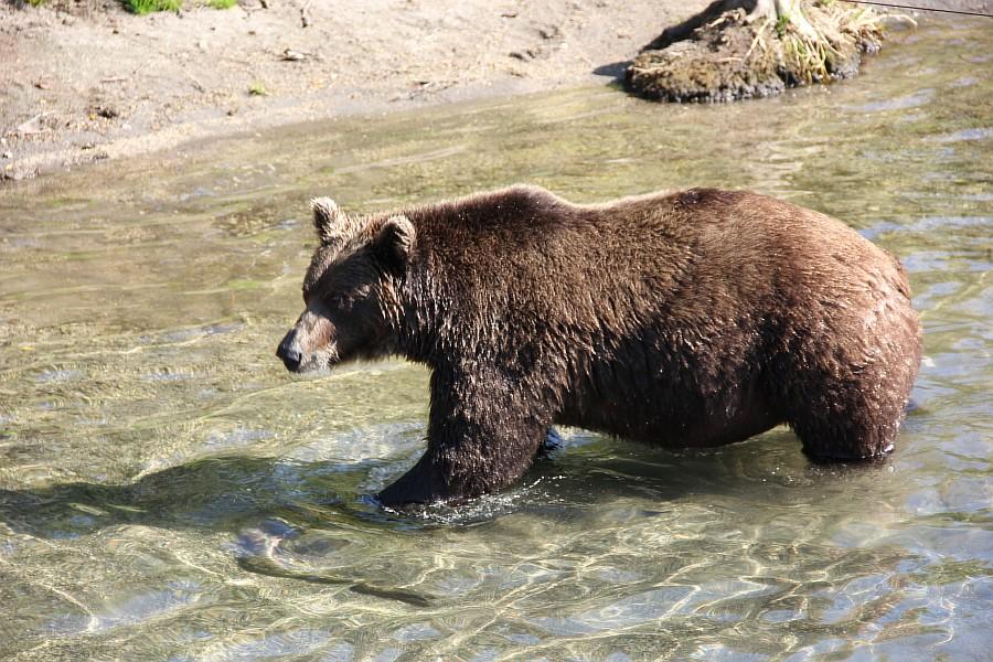 Камчатка, медведи, рыбалка, Кроноцкий заповедник, Аксанов Нияз, фотографии, kukmor, природа, путешествия, Россия, of IMG_5998