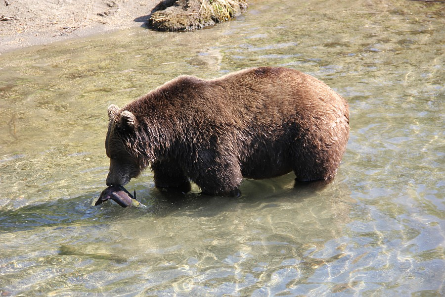 Камчатка, медведи, рыбалка, Кроноцкий заповедник, Аксанов Нияз, фотографии, kukmor, природа, путешествия, Россия, of IMG_6002