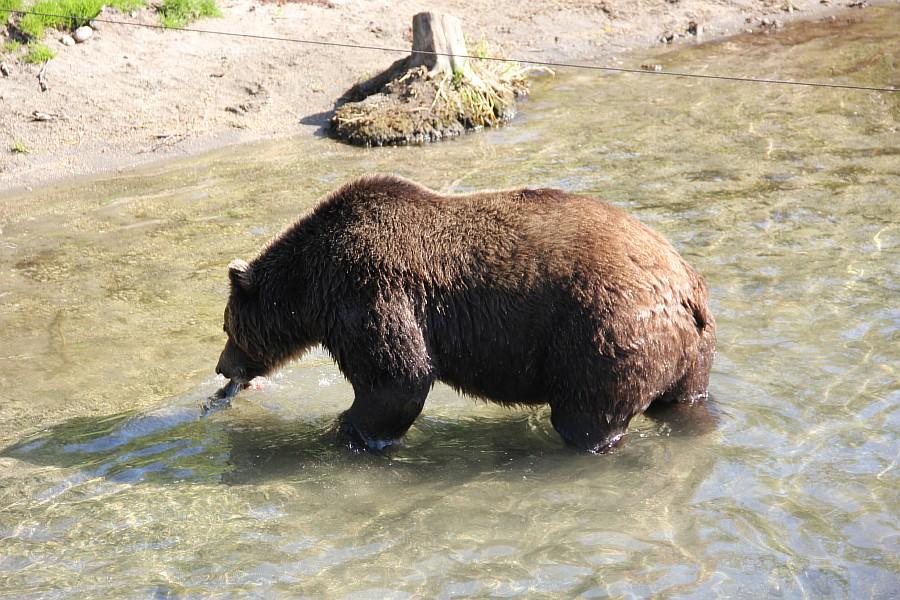 Камчатка, медведи, рыбалка, Кроноцкий заповедник, Аксанов Нияз, фотографии, kukmor, природа, путешествия, Россия, of IMG_6005