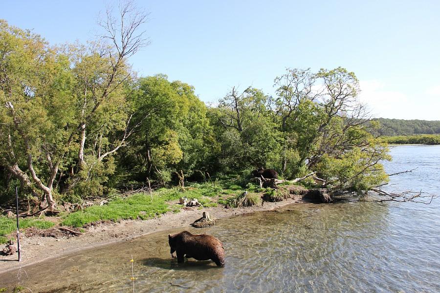 Камчатка, медведи, рыбалка, Кроноцкий заповедник, Аксанов Нияз, фотографии, kukmor, природа, путешествия, Россия, of IMG_6007