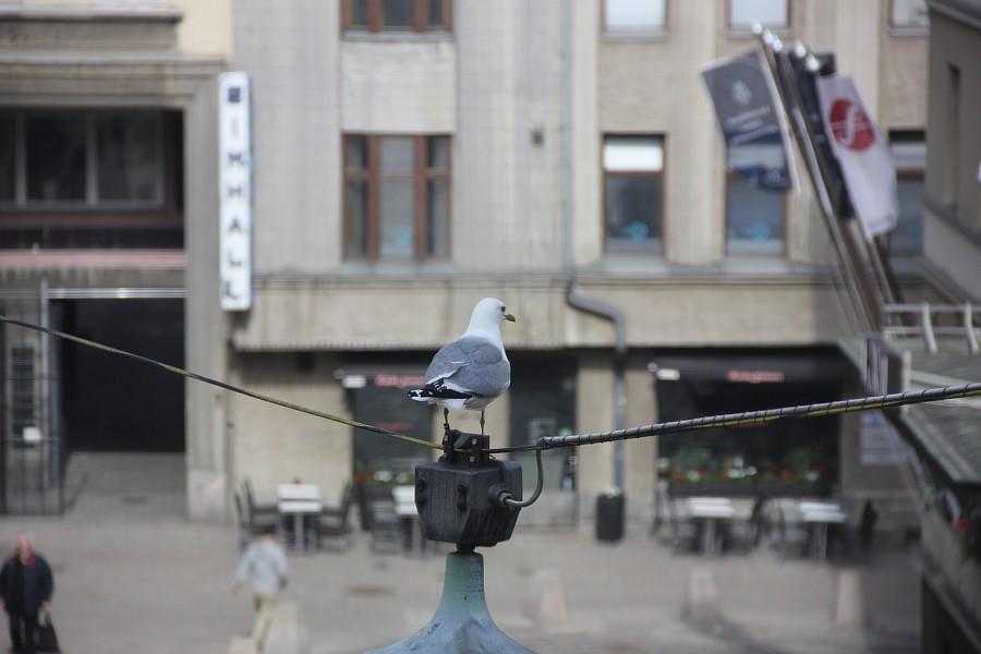 Хельсинки, Helsinki, путешествия, фотография, Аксанов Нияз, kukmor, город, архитектура, история, спорт, Финляндия, жж, блогеры, of IMG_1733