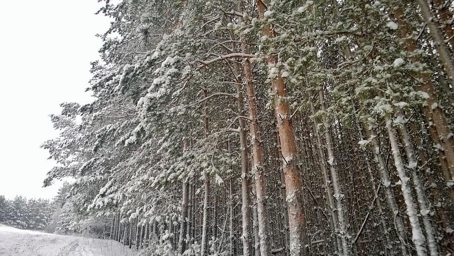Кукмор, новый год, горнолыжка, лес, дети, фотографии, Аксанов Нияз, kukmor, зима, снег, of WP_20150103_002