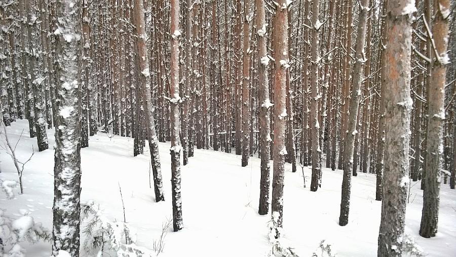 Кукмор, новый год, горнолыжка, лес, дети, фотографии, Аксанов Нияз, kukmor, зима, снег, of WP_20150103_005