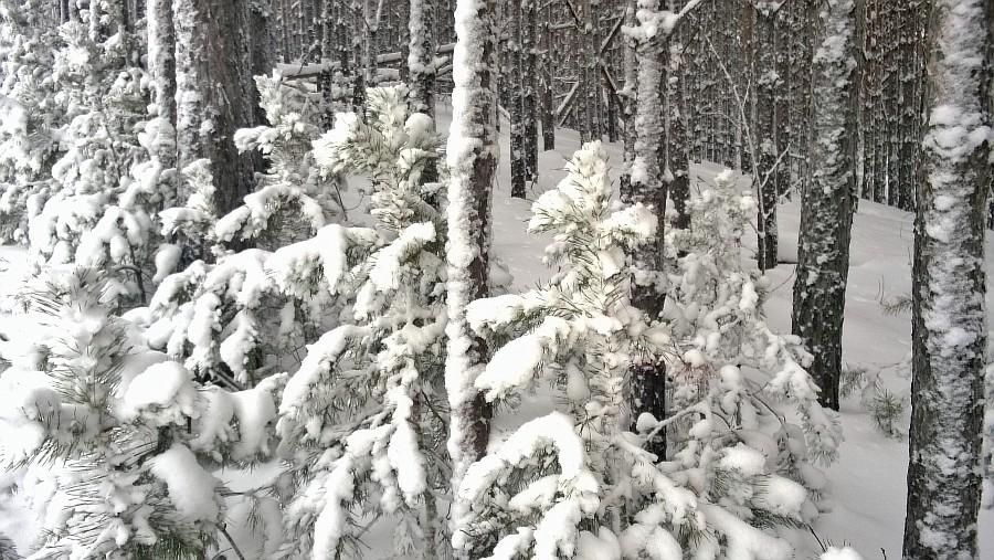 Кукмор, новый год, горнолыжка, лес, дети, фотографии, Аксанов Нияз, kukmor, зима, снег, of WP_20150103_011