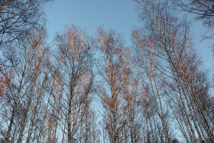 Лыжи, Казань, Парк Горького, зима, nordway, Аксанов Нияз, фото,  of IMG_4800