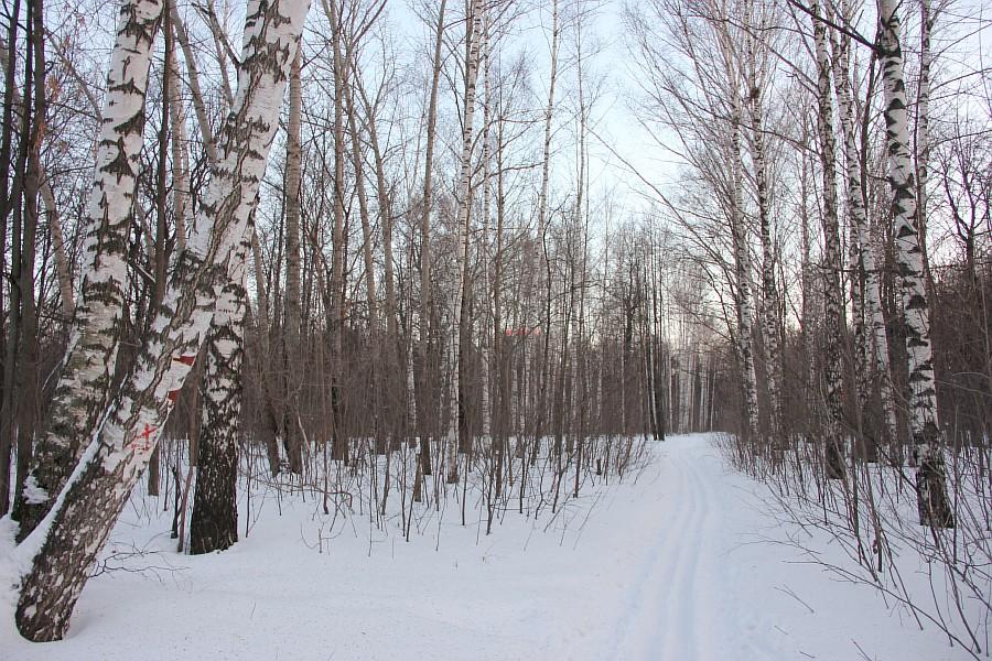 Лыжи, Казань, Парк Горького, зима, nordway, Аксанов Нияз, фото,  of IMG_4859