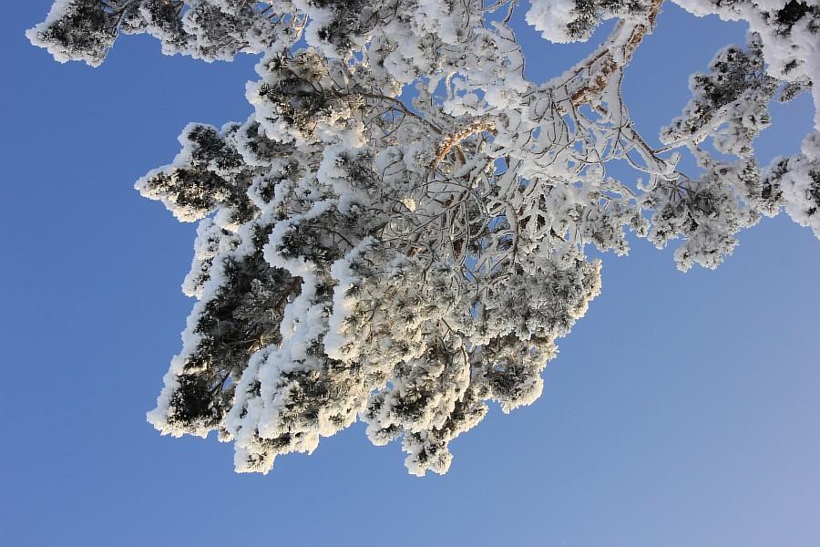 Я под снегом картинки