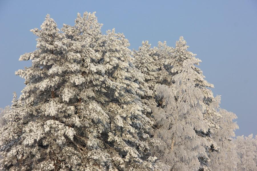 Галерея фото зима