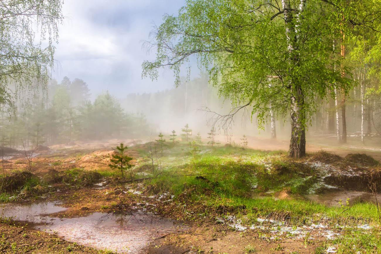 Весенний лес обои на рабочий стол картинки весенний лес