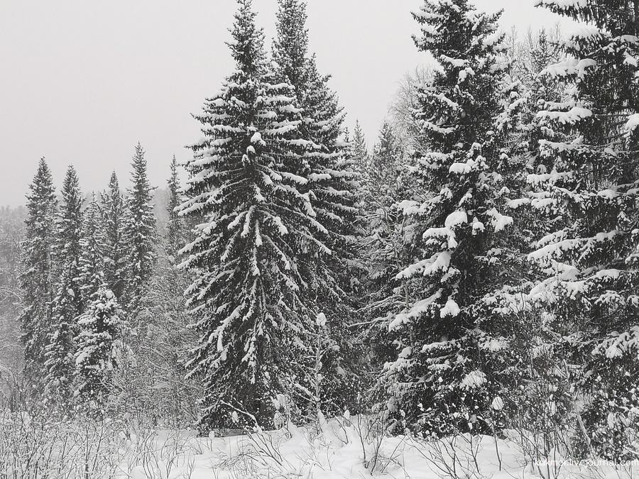 Неройка, Усть-Пуйва, коми-зыряне, хмао, югра, следопыт, удивительная югра, экспедиция, урал, авто, фотографии, Аксанов Нияз