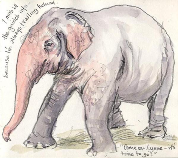 elephant-col