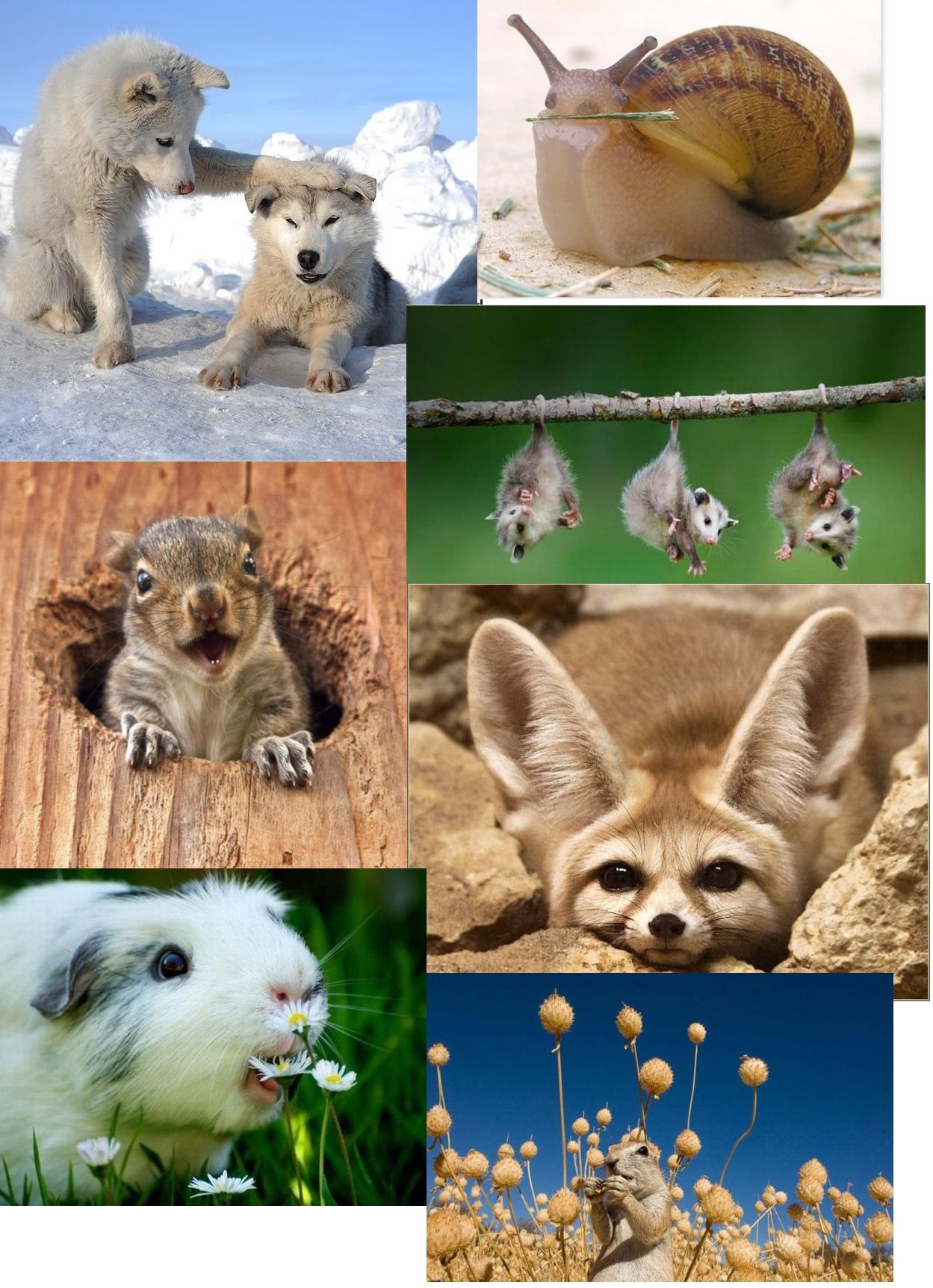 фото охрана животных артисту