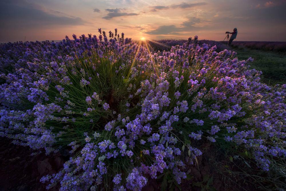 Фототур лавандовые поля Болгарии