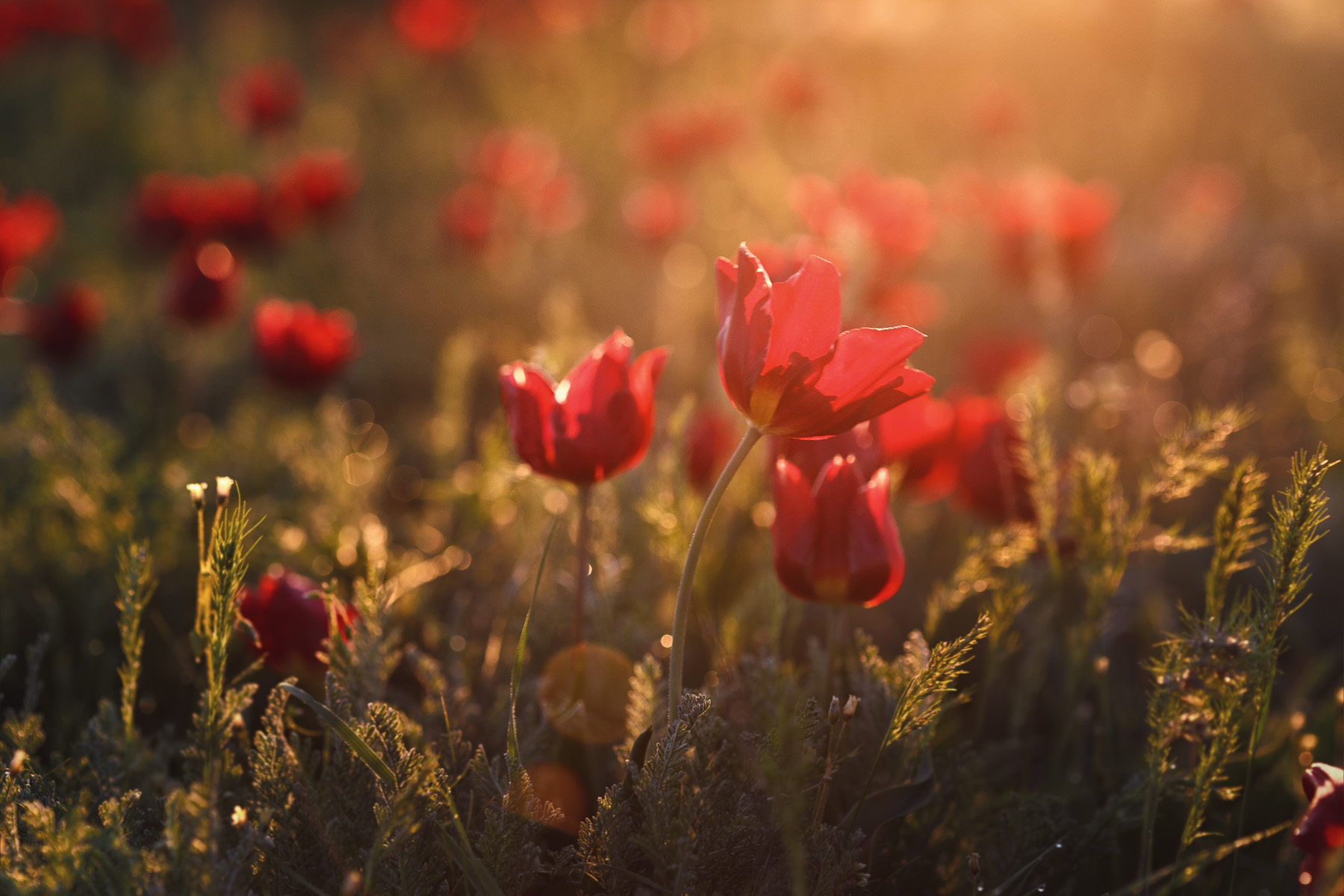 Цветущая Калмыкия