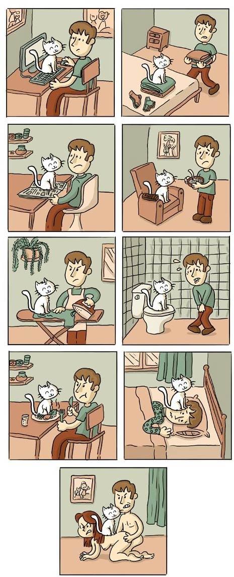 день из жизни кошки