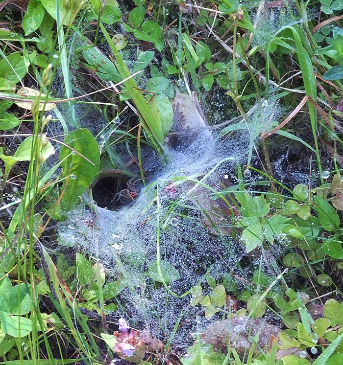 паук и его ловушка