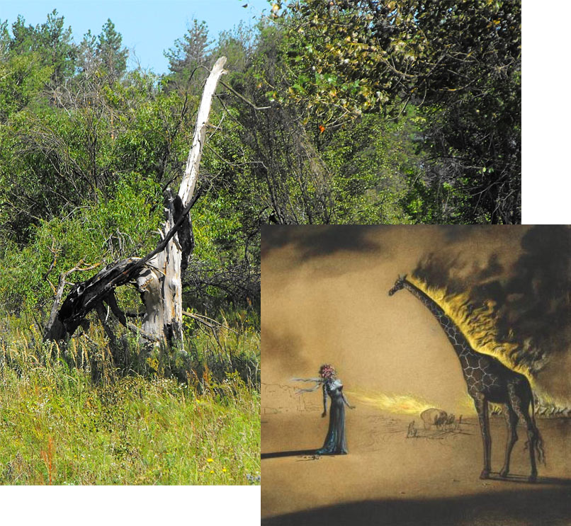 пылающая жирафа