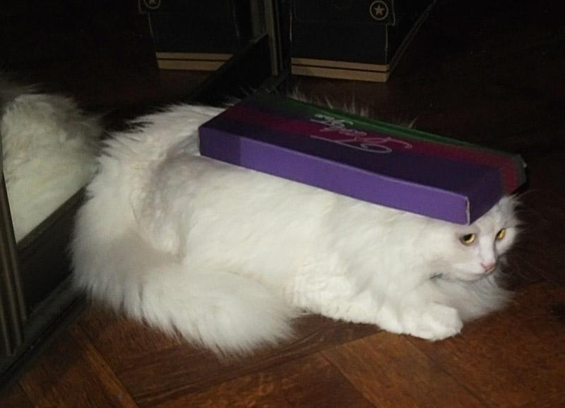 кошка Катушка в домике