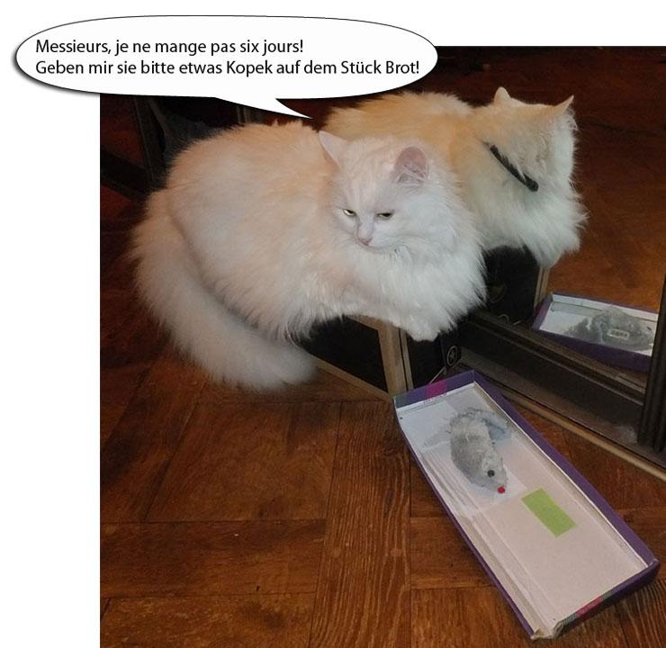 кошка Катушка