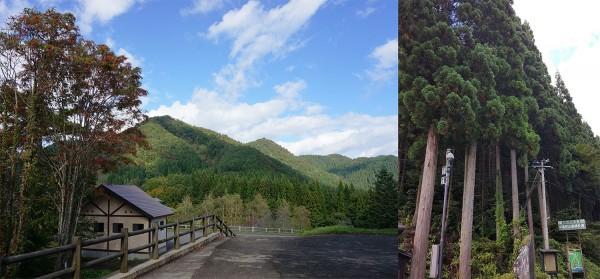 Двойной лес.jpg