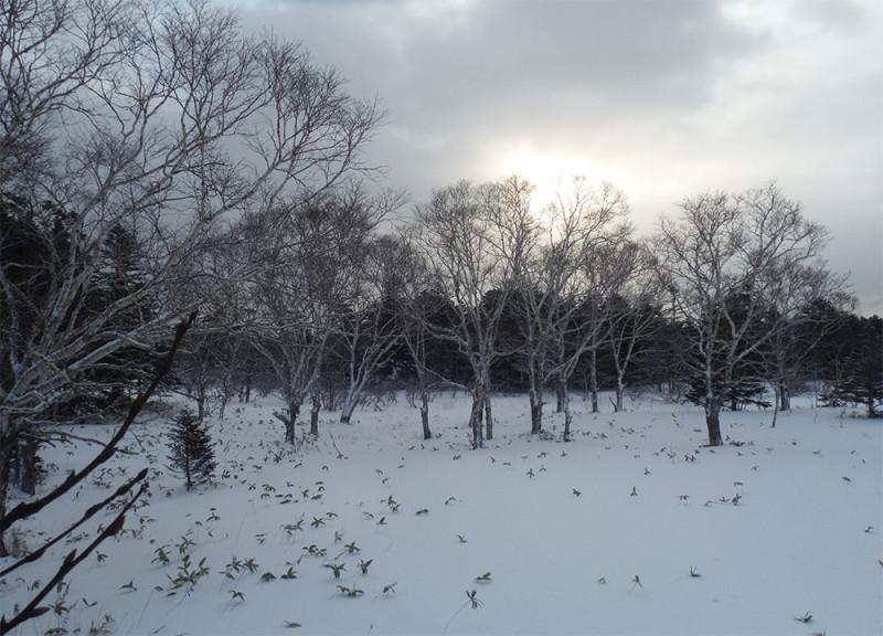 Зимние каменные березы и солнце сквозь тучи.
