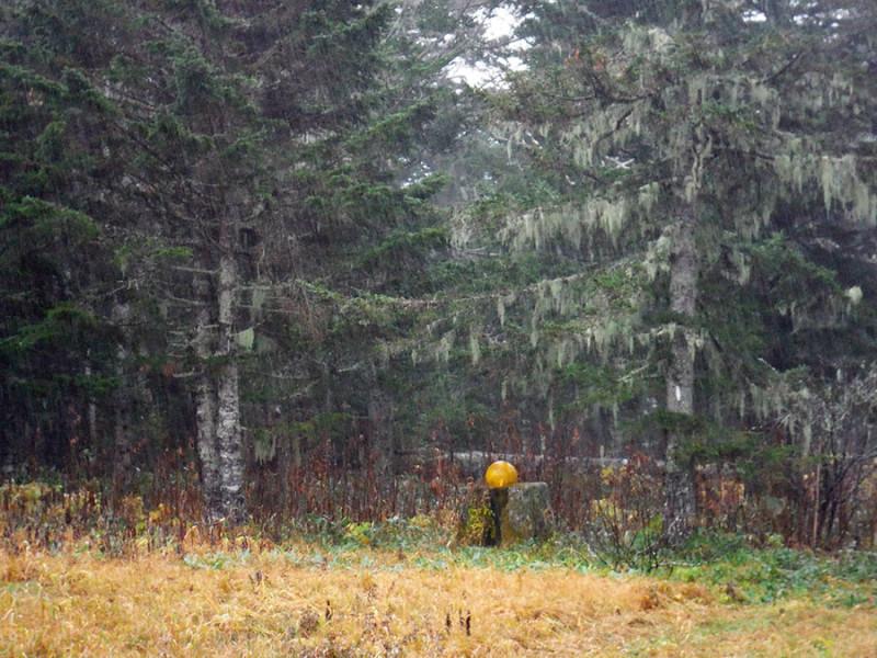 Вот такой густой хвойный лес возле кордона. И там где-то живёт рыбный филин.