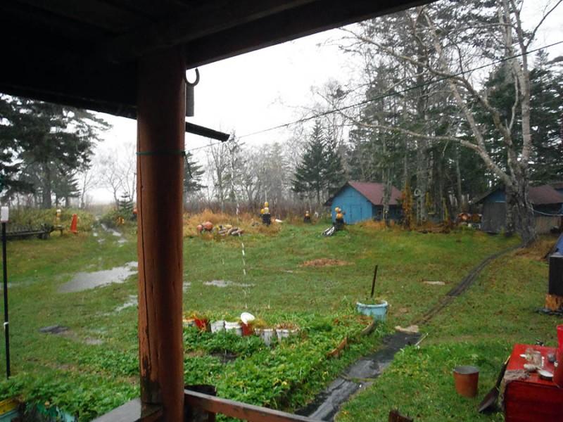 Конец осени на Кунашире. Снова дождь. 10.11.2018.