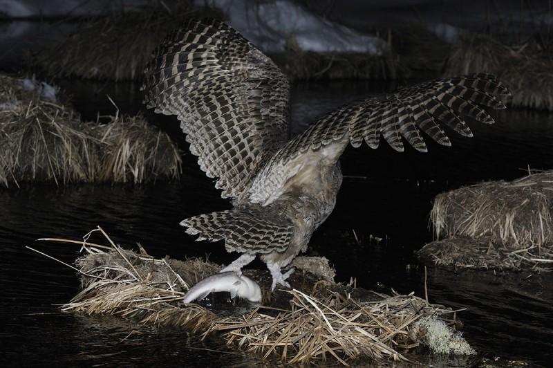 Рыбу поймал... Автор фото: Пётр Романов.