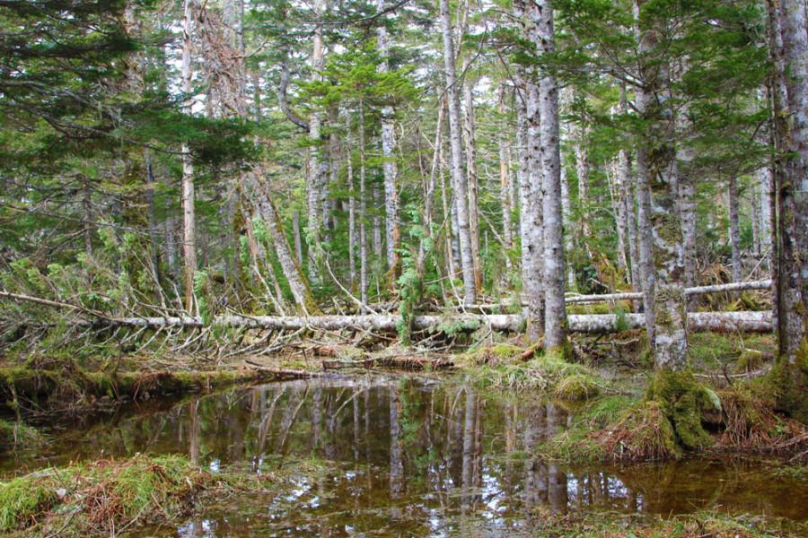 Еще лес.