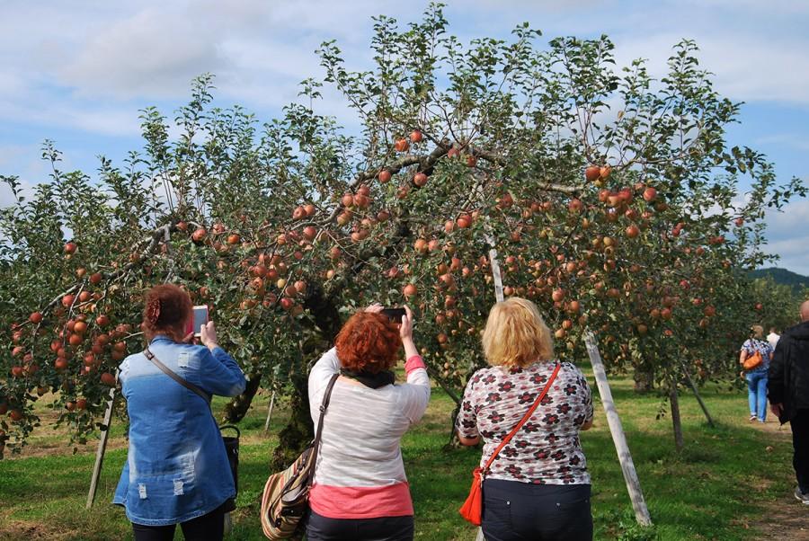 Группа яблоки1СК.jpg