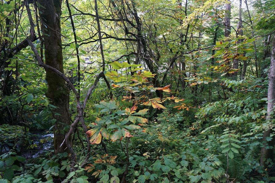 Лес4_Водопад4.jpg