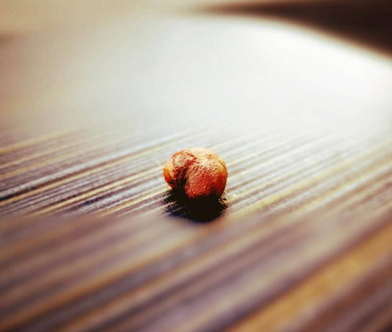 Радостная новость, семена получили еще зимой и наверное хорошее время для того что бы посадить их. Наше исходное семя баобаба, ниже Delonix decaryi.