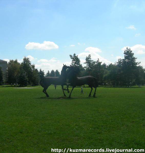 лошади 1