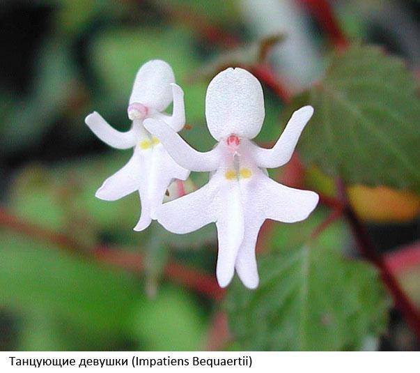 цветок3