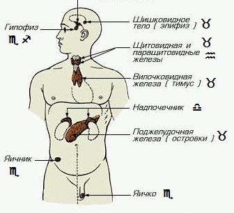 endorinnaya_sistema