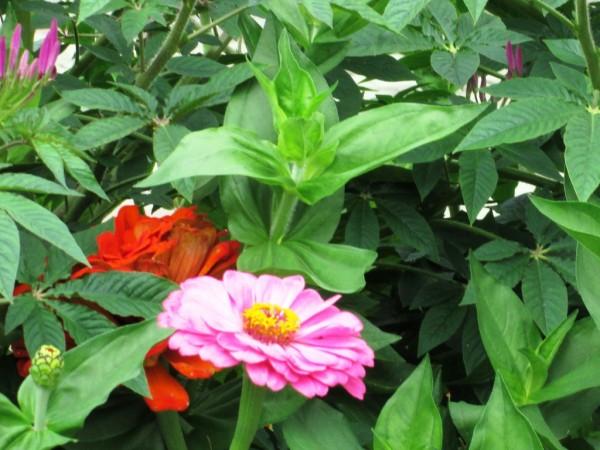 IMG_0587цветы
