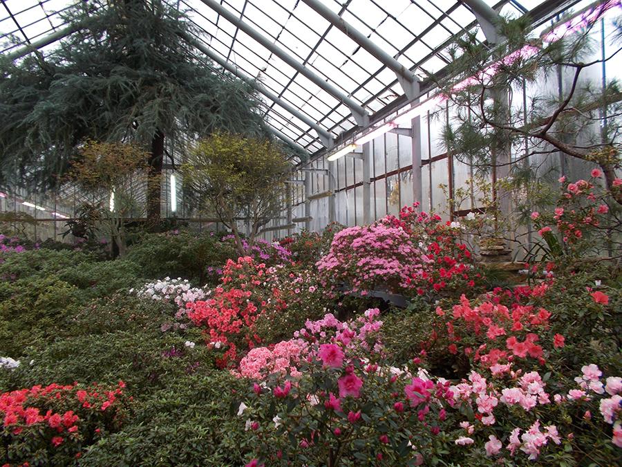 фото ботанического сада на алтуфьевском шоссе создании данного