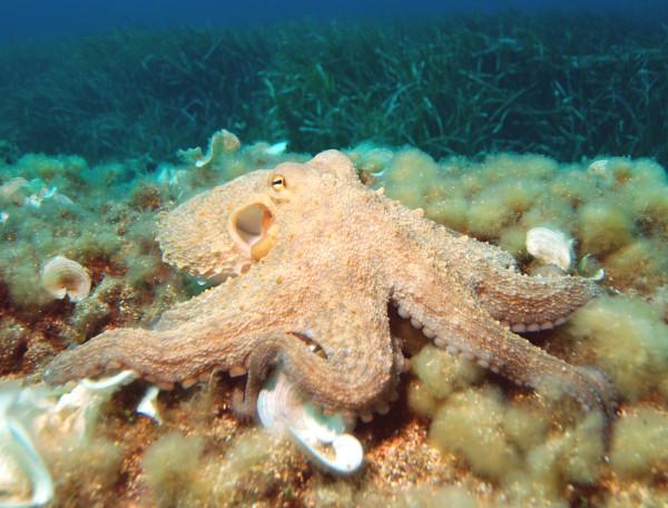 Octopus2[1]