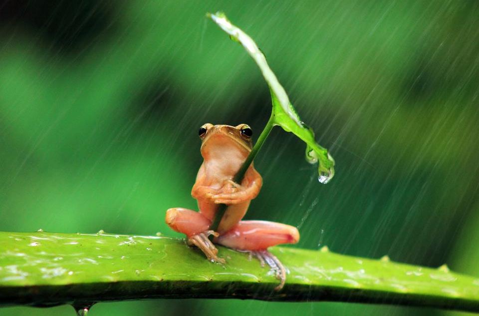 frog-under-umbrella[1]