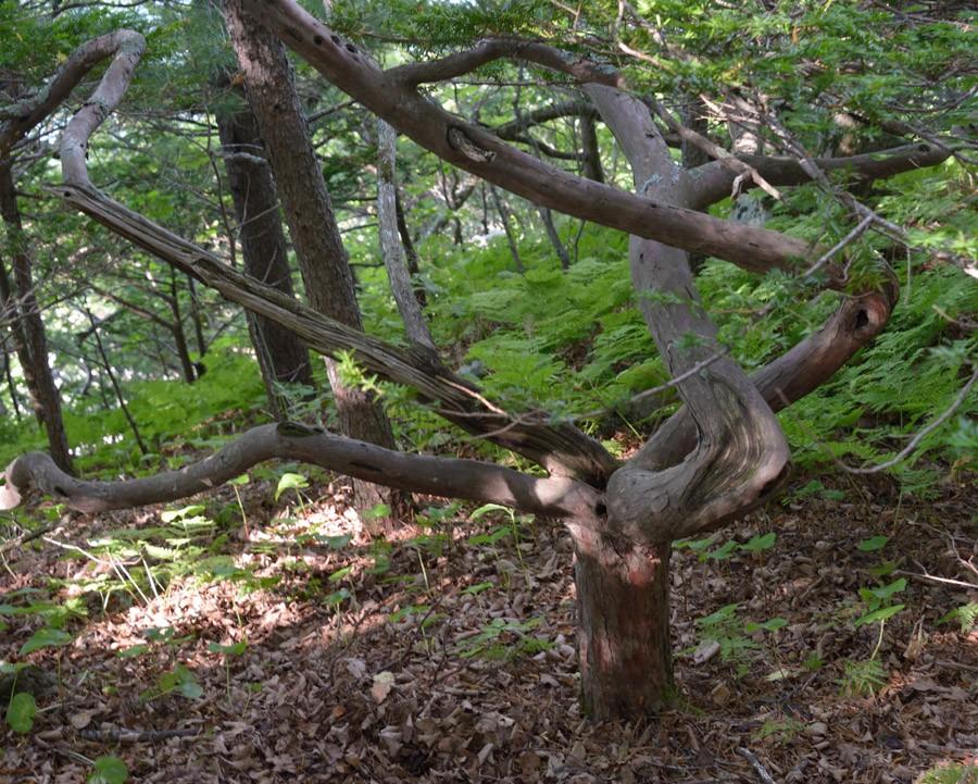 дерево как знак бесконечности2
