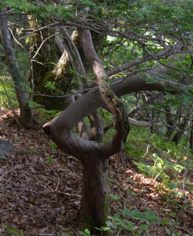 дерево как знак бесконечности