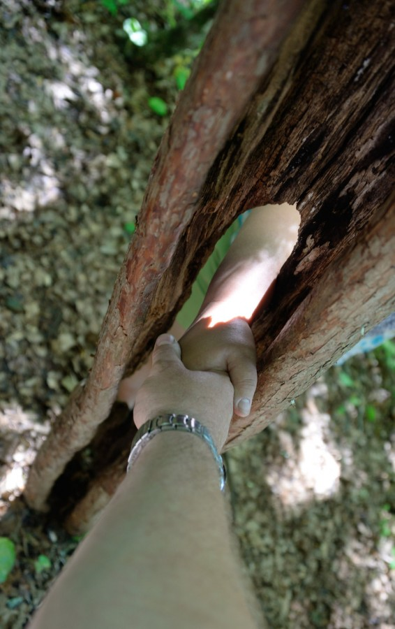 дерево-мириться
