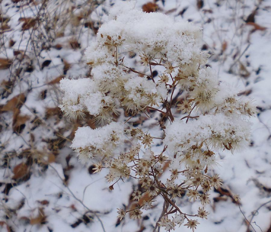 Озеро Учум в начале зимы P1030757