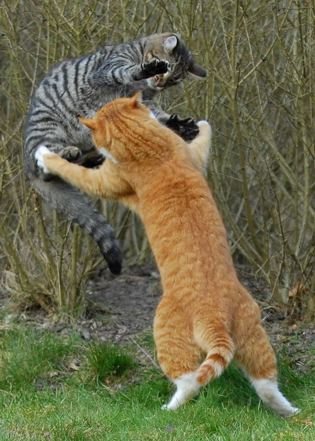 cool-cat-fight-flying-16