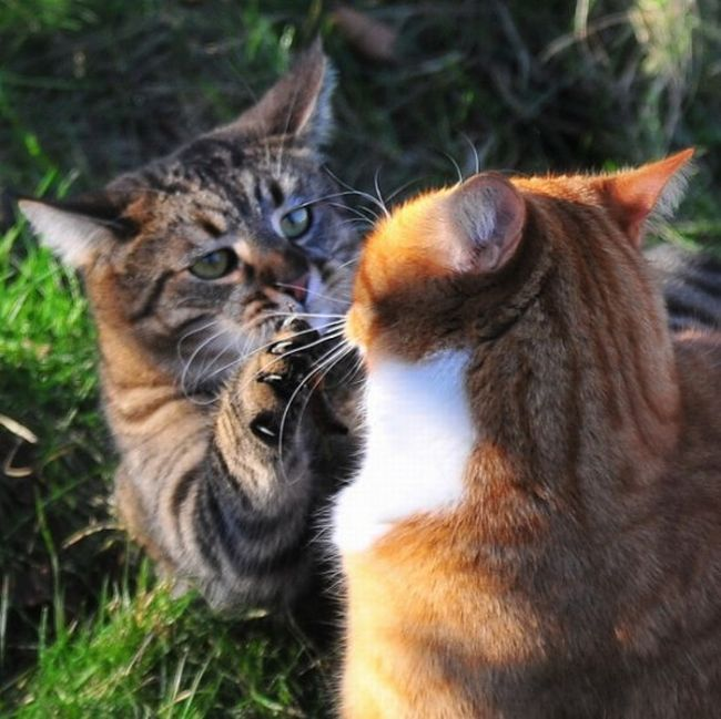 cat_fight_53