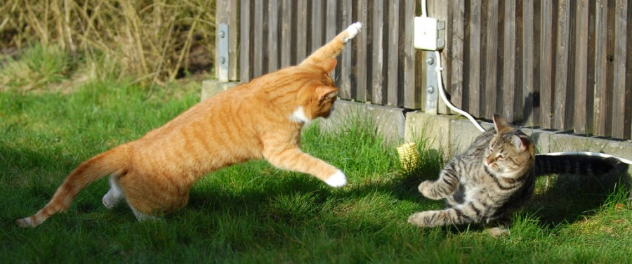 Cat_Fight_21-s1024x428-345060